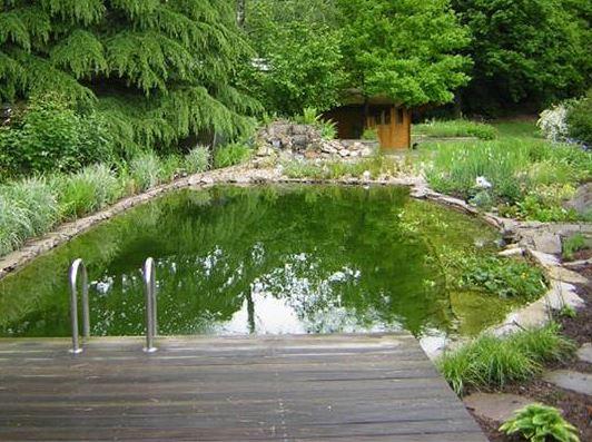 Teich tr ume werden wahr koifarm straeten for Kois und goldfische in einem teich