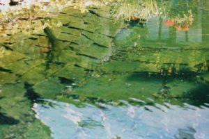Teich voller Algen