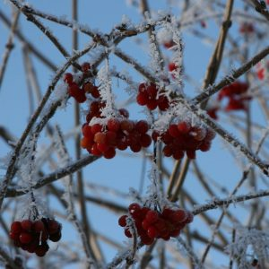 Koifarm Straeten im Winter