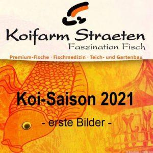 Koi Saison 2021 - erste Bilder