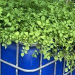 Filterpflanze